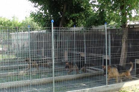 Pensione per cani e gatti